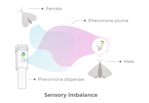 Mating disruption in the form of sensory imbalance