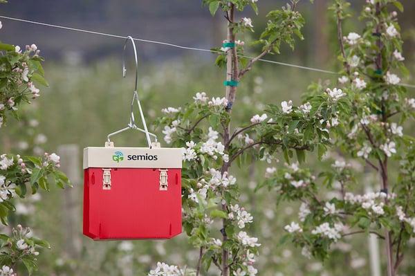 Codling moth camera trap