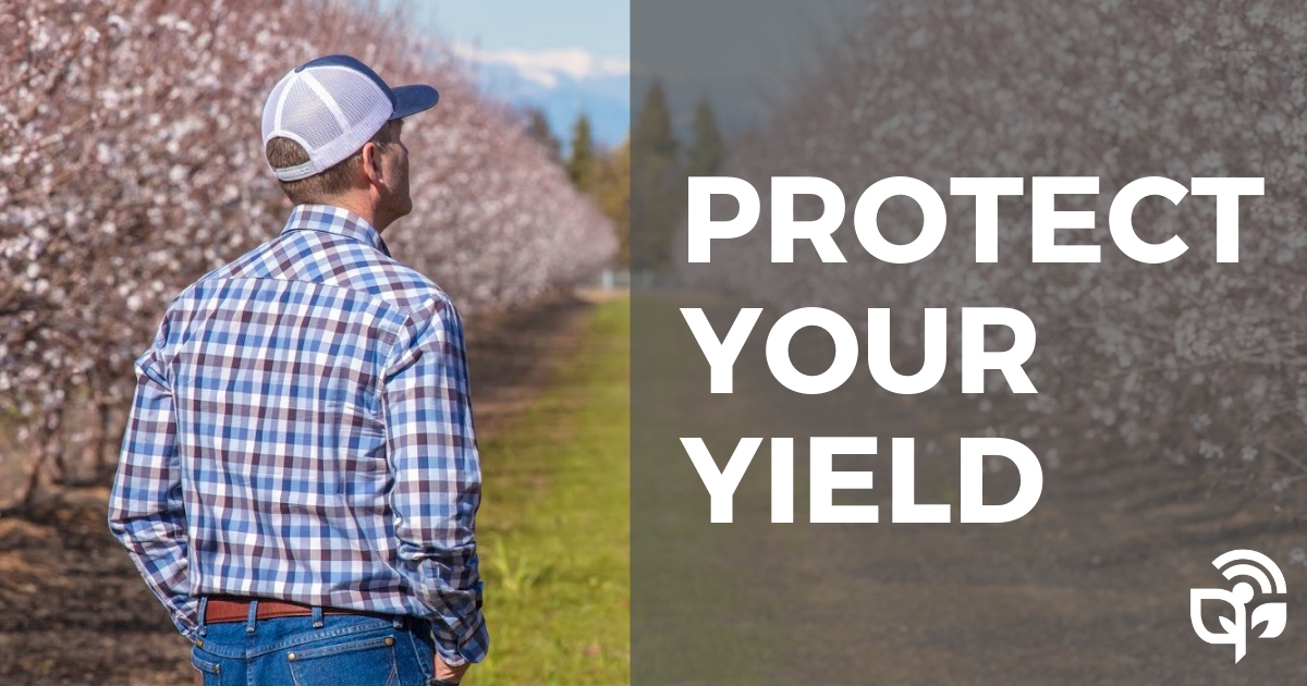 protect your yield1 (1)