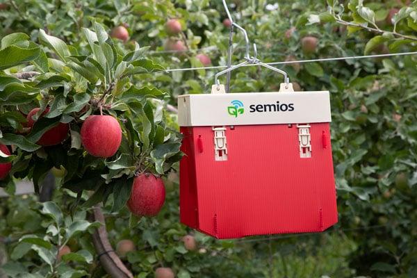 semios-trap-red-apple